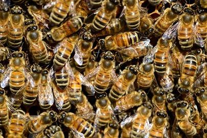 honey-292132_640