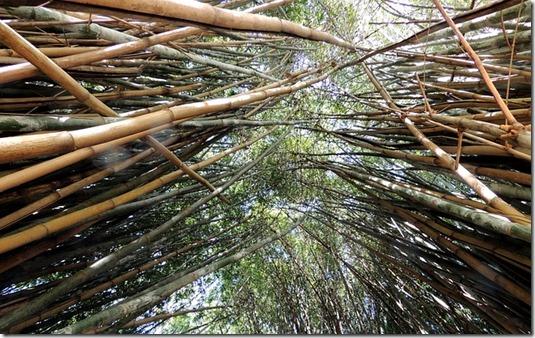 bamboos-370158_640