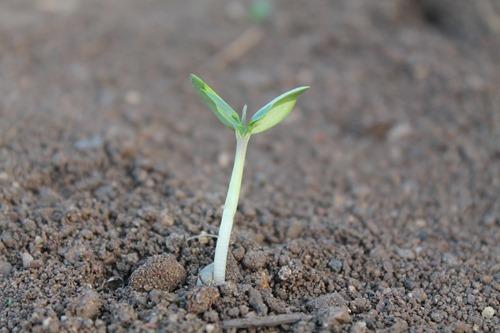 plant-259806_1280